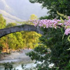 Ponte-Fiore-Farfalla